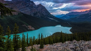 Canada Forest Lake Landscape Mountain Nature Peyto Lake 2400x1600 wallpaper