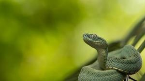 Green Reptile Snake Viper 2048x1137 Wallpaper