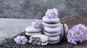 Macaron Still Life Sweets 2540x1693 Wallpaper