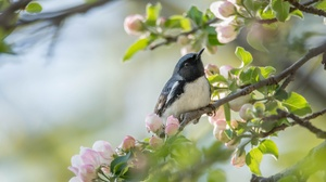 Bird Blossom Wildlife 2048x1295 Wallpaper