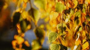Birch Fall Leaf 3840x2160 Wallpaper