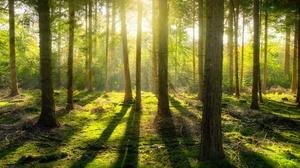 Forest Moss Pine Sunbeam 3840x2160 Wallpaper