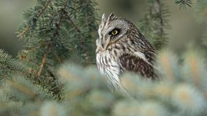 Owl Bird Wildlife 3600x2025 Wallpaper