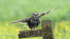 Bird Depth Of Field Owl Rain Wildlife 4342x2882 Wallpaper