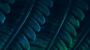 Abstract Photography Fern Leaves Plants Dark Foliage Macro Minimalism Closeup Nature Texture Pattern 6000x4000 Wallpaper