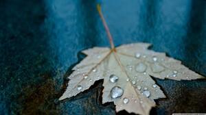 Macro Leaves Water Drops Leaves Water Drops 2400x1350 Wallpaper