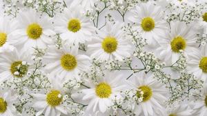 Baby 039 S Breath Chrysanthemum Flower White Flower 2000x1329 Wallpaper