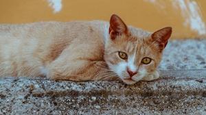 Cat Pet 5120x3413 Wallpaper