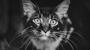 Pet Black Amp White Stare 1920x1080 Wallpaper