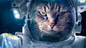 Astronaut Cat 4928x3280 Wallpaper
