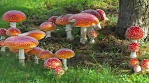 Earth Mushroom 2049x1080 Wallpaper