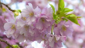 Blossom Branch Flower Macro Spring 2048x1366 Wallpaper