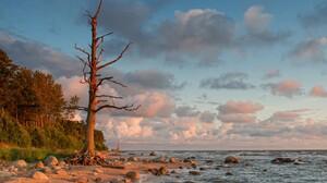 Sea Tree Rock Cloud Horizon Dead Tree 1920x1202 Wallpaper
