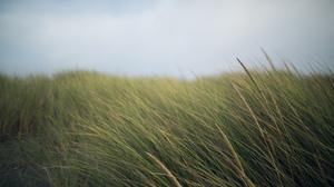 Grass 2048x1365 Wallpaper