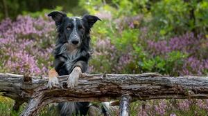 Dog Pet 5915x3943 Wallpaper