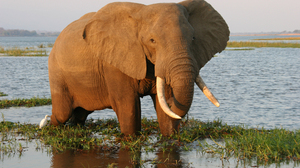Animal Elephant 3384x2148 Wallpaper