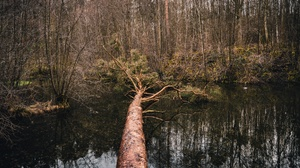 Forest Nature Reflection Tree Water 6000x4000 wallpaper