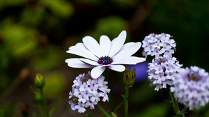 Colors Flower Macro Plant Purple White 2560x1600 Wallpaper
