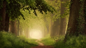 Dirt Road Fog Forest Greenery 2000x1125 Wallpaper