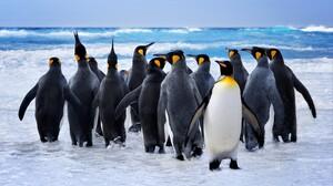 Bird King Penguin Ocean Penguin Sea 7080x4824 Wallpaper