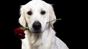 Dog Pet 1920x1280 Wallpaper