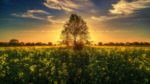 Flower Grass Landscape Nature Sky Sunset Tree 2048x1232 Wallpaper