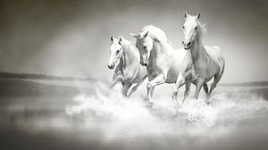 Horse Water White 1920x1271 Wallpaper