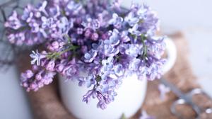 Lilac Still Life 1920x1200 Wallpaper