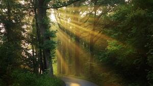 Forest Morning Road Sunbeam 3840x2160 Wallpaper