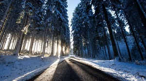 Outdoors Road Trees Winter Snow Ice Cold Sunlight 2048x1152 Wallpaper