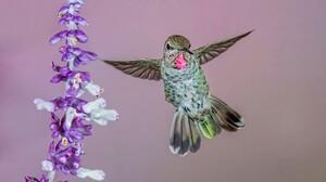 Bird Flower 2048x1216 Wallpaper