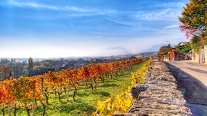 Man Made Vineyard 1920x1080 Wallpaper