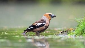 Bird Grosbeak Reflection Wildlife 2048x1365 Wallpaper