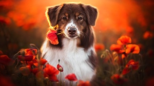 Dog Outdoors Animals Flowers Mammals Red Flowers Colorful Plants Orange Background Looking At Viewer 2048x1365 Wallpaper