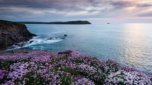 Coast Flower Ocean England 2047x1366 Wallpaper