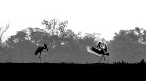 Bird Black Amp White 1920x1200 Wallpaper