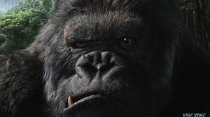 Movies King Kong 2005 Year Creature 1920x1080 Wallpaper