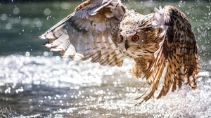 Flight Bokeh Bird Wildlife 2048x1350 Wallpaper