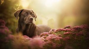 Dog Pet Flower Depth Of Field Pink Flower 2048x1341 Wallpaper