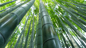 Bamboo Greenery Nature 5760x3840 wallpaper