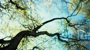 Treetops Canopy Leaf Sky 2560x1600 Wallpaper
