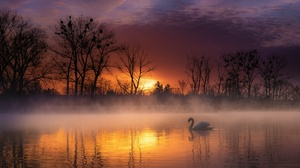 Sunset Fog Lake Bird Swan Wildlife 2200x1383 Wallpaper