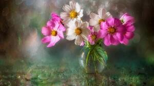 Bokeh Cosmos Flower Pink Flower Vase White Flower 3500x2305 Wallpaper
