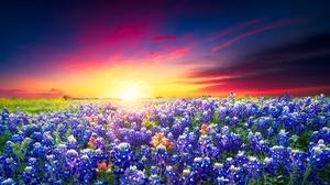 Field Summer Sky Sunset Flower Meadow 2048x1366 Wallpaper