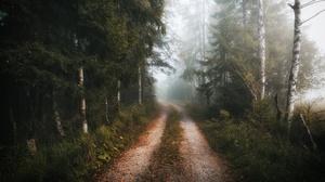 Birch Fog Forest Path 3840x2160 Wallpaper