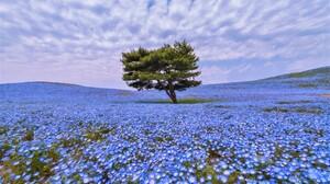 Blue Flower Earth Field Flower Tree 3840x2364 Wallpaper