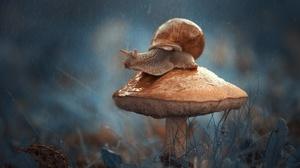 Fall Macro Mushroom Rain Snail 2000x1321 wallpaper