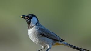 Bird Bulbul Wildlife 2048x1366 Wallpaper