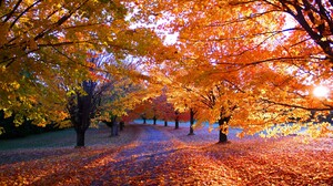 Nature Fall Park Leaves Orange Trees Path Sunlight Landscape Grass Morning 3000x1875 Wallpaper