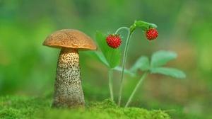 Macro Moss Mushroom Nature Strawberry 2048x1413 Wallpaper